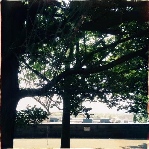 20130718-205100.jpg