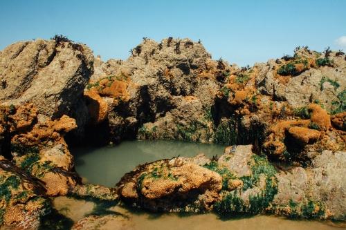 Rock Pool-2389