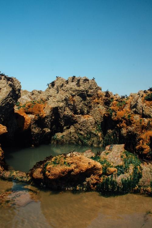 Rock Pool-2390