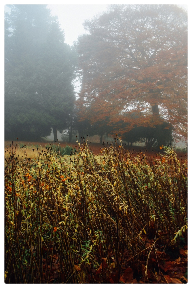 November Fog (2/6)