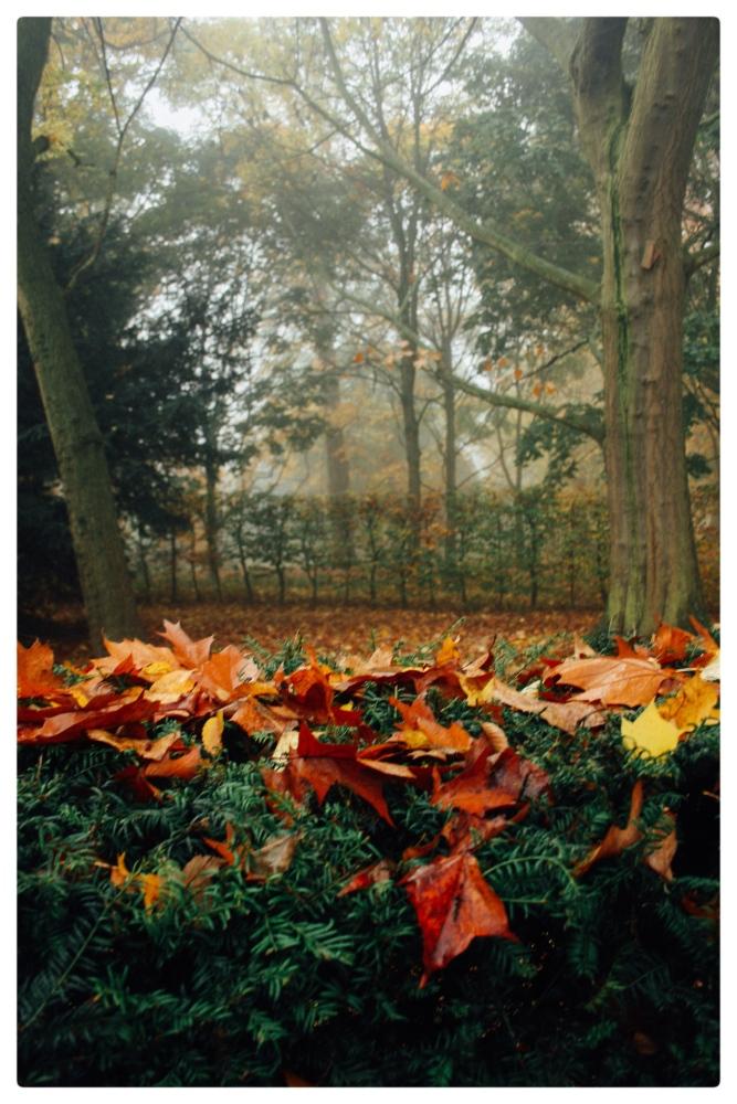 November Fog (1/6)