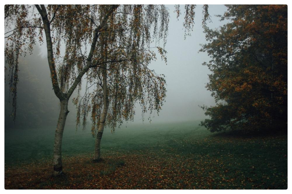 November Fog (6/6)