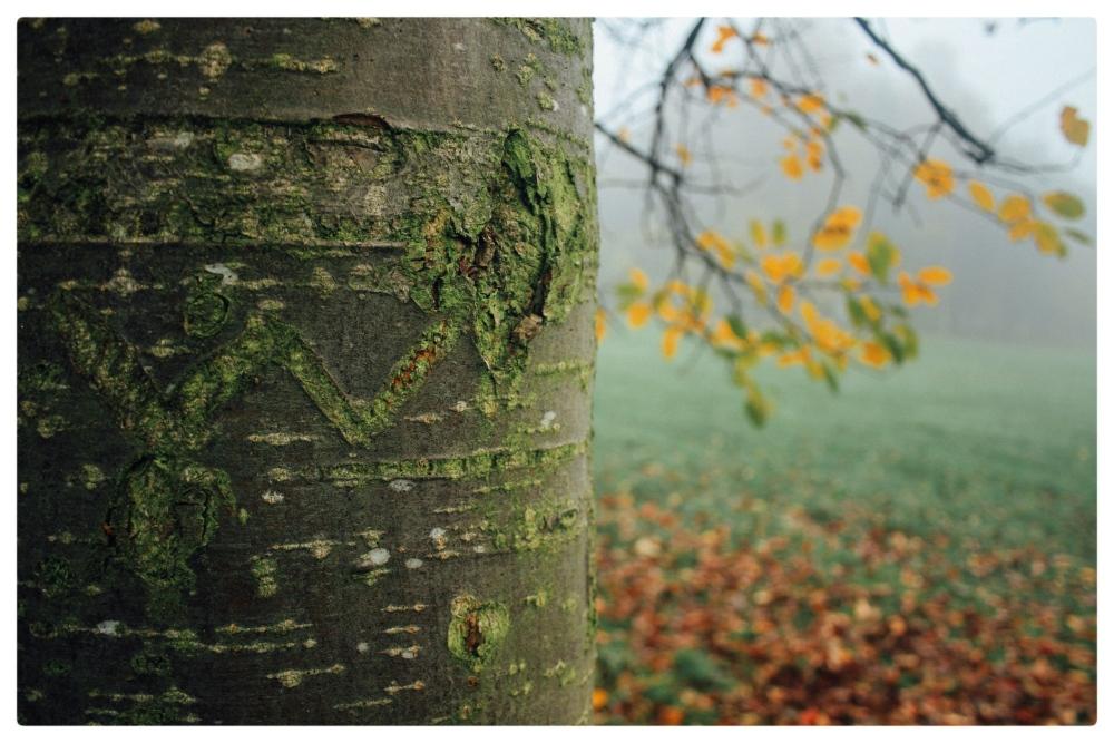November Fog (5/6)