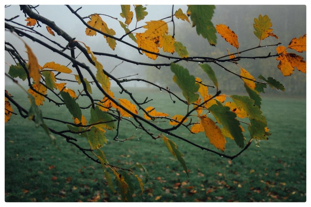 November Fog (4/6)