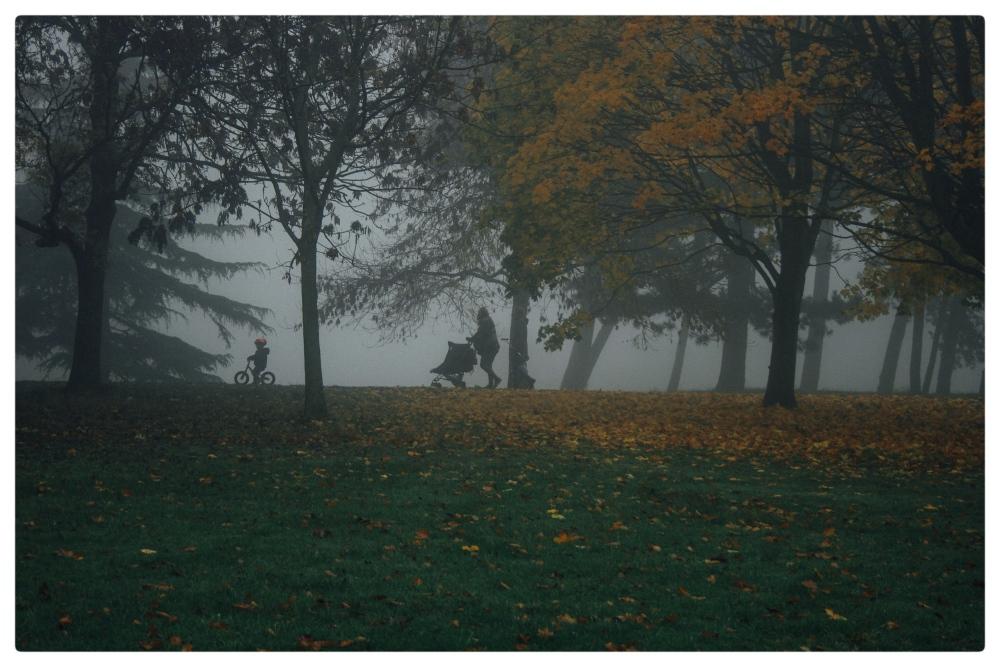 November Fog (3/6)