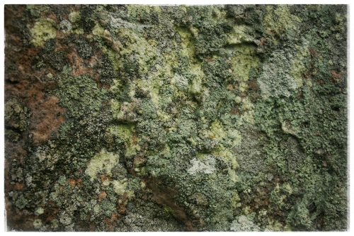 Avebury Stone Detail